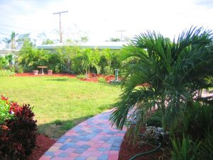 Neighbor planted the Areca Plams on our common property line.