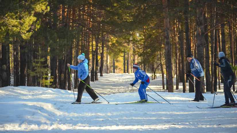 forest winter sport skiing